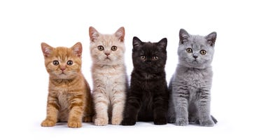 kittens sitting in a line