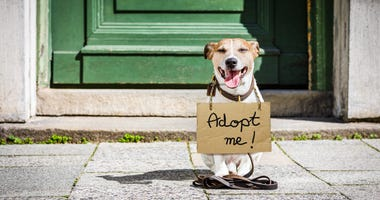 """puppy on the street wearing an """"adopt me"""" sign"""