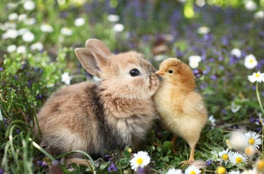 Bird_and_Bunny
