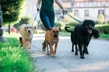 Dog_Walking