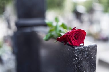 Rose on a grave
