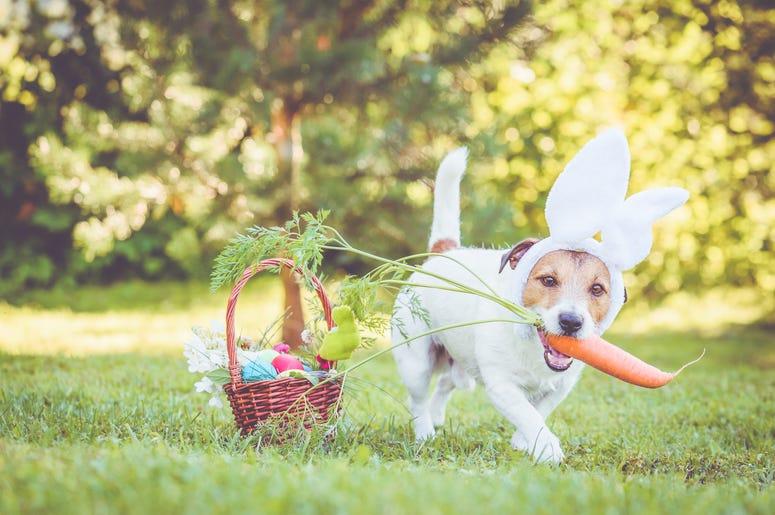 Dog with bunny ears