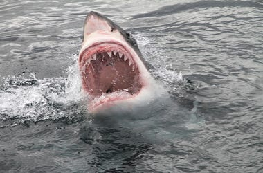 Great White, Shark, Attack, Bite, Teeth, Ocean, Spray