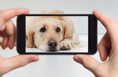 Dog on a smart phone