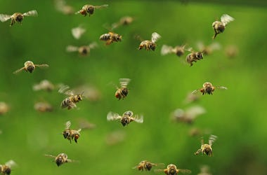 Bees, Swarm, Flying, Honey Bees, Green Bukeh