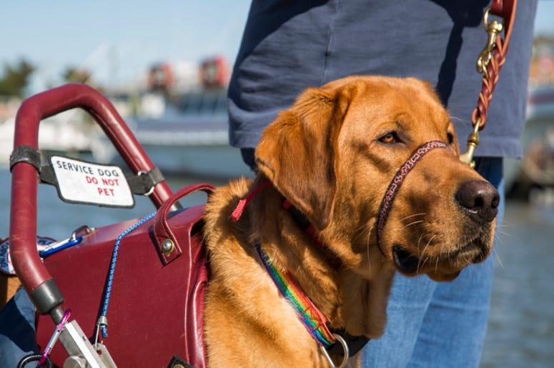 Service_Dog