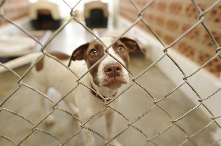 Shelter Dog, Cage, Adoption, Snoot