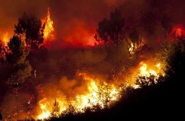 Forest Fire, Trees