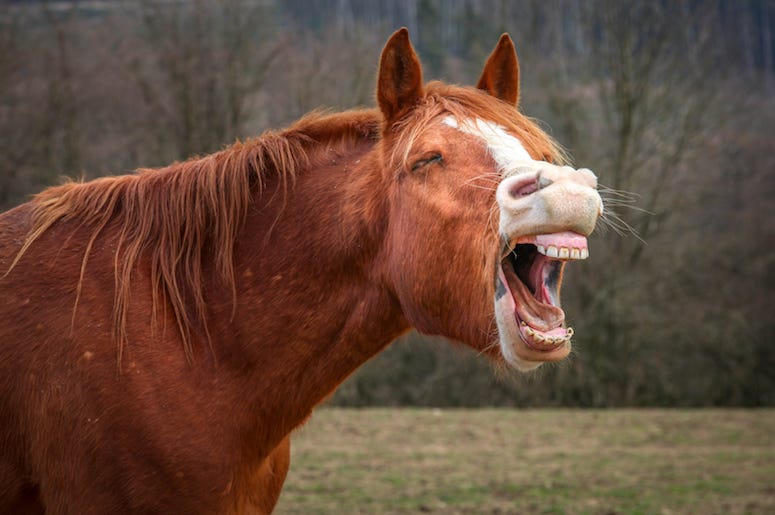 Horse, Laughing, Teeth