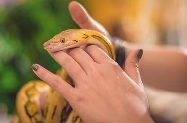 Snake in the hand