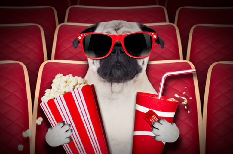 Dog at the theater