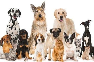 Many Pets