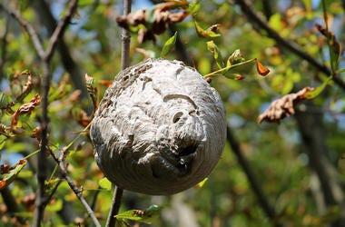Bees, Wasps, Nest, Beehive, Tree