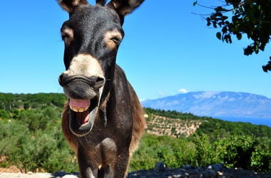 Donkey, Laughing, Blue Sky, Greek Island