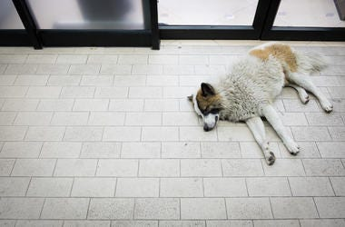 Dog, Sleeping, Convenience Store, Entrance, Stray