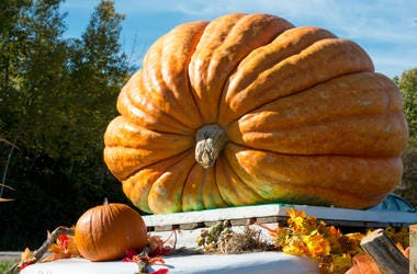 Giant_Pumpkin