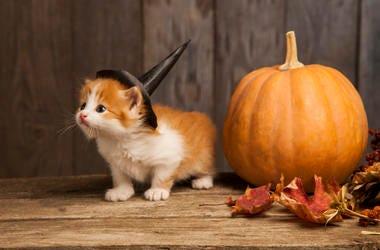 Halloween_Cat
