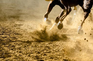 Horse, Racing, Running, Dirt Track,