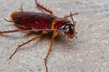 Cockroach, Concrete, Outside, Close Up, Bug