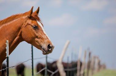 Majestic, Horse, Fence, Outside