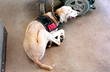 Emotional Support Dog, Animal