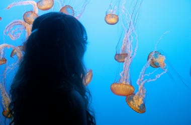 Monterrey Bay Aquarium in the Coastal town of Monterey in Central California. (Photo credit: Getty Images)
