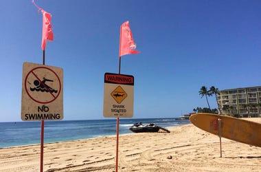 Signs warning of a shark sighting