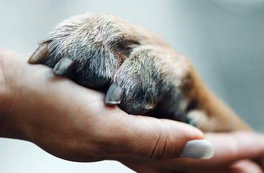 Netflix' 'Dogs' (Photo credit: Netflix)