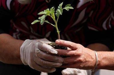 A tiny sapling