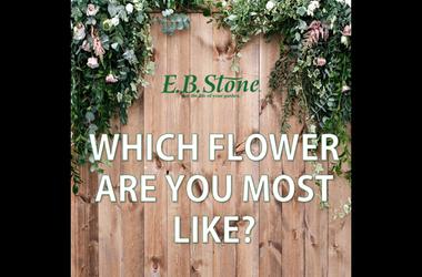 EB Stone