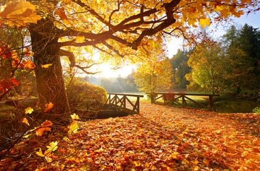 Fall, Autumn, Weather, Rural, Forest, Leaves