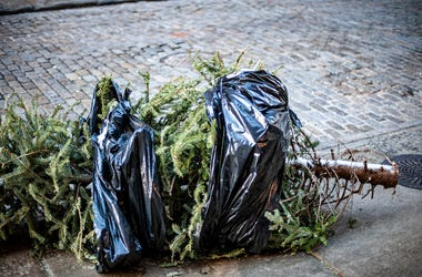 Christmas Tree, Trash, Street, Garbage Bag