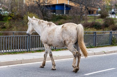 Horse, Roaming, Street, Highway