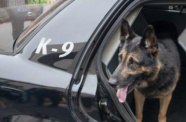 K9 Officer, Police, Dog, Car, Backseat