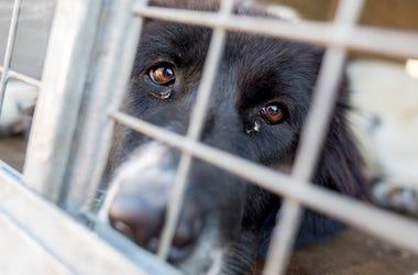 Dog, Cage, Lab