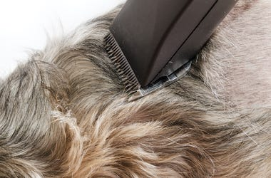 Dog, Shaving, Grooming, Razor, Wool Clipper