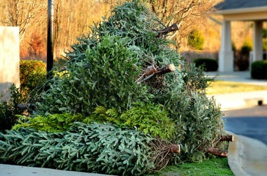 Christmas Trees, Trash, Pickup, Dead, Front Yard, Curb