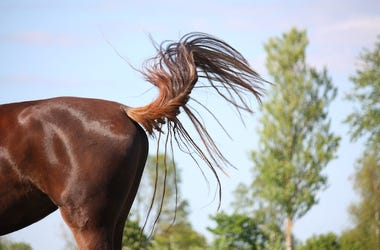 Horse, Tail, Outside, Waving, Wind
