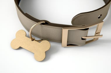 Leather Dog Collar, Dog Bone Tag