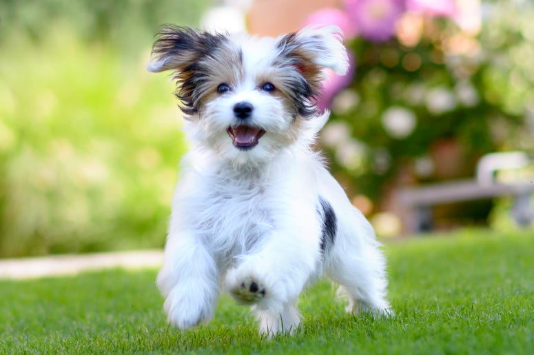 15 Pictures Of Puppies Doing The Cutest Puppy Things | 98.7 KLUV