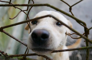 Dog, Cage, Nose, Snoot