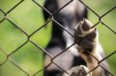 Dog, Cage, Fence, Paw, Animal Sanctuary