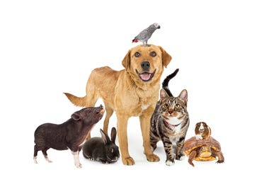 Group of common domestic animals together