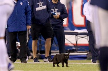 Dallas Cowboys, New York Giants, MetLife Stadium, Field, Black Cat, Kitten, 2019