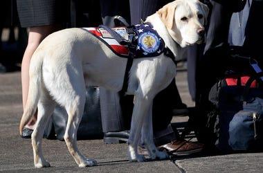 George Bush, Sully, Service Dog, Service Members, Yellow Labrador Retriever