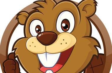 cartoon_beaver