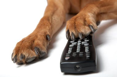 Dog, Paw, Remote, TV, Remote Control