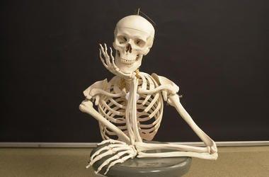 Skeleton, Posing, Classroom