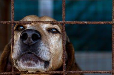 Dog, Puppy, Animal Shelter, Cage