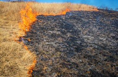 Grass Fire, Burning, Flames
